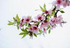 塔罗牌测你近期的桃花会在哪盛开?
