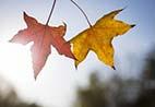 大旺日:12星座10月哪几天运势超级旺